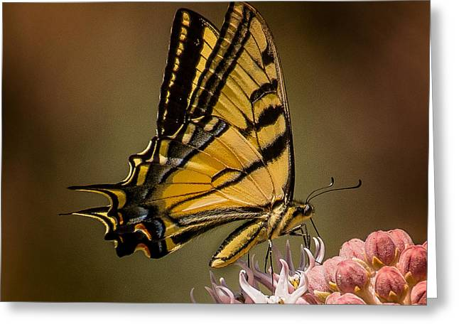 Swallowtail On Milkweed Greeting Card by Janis Knight