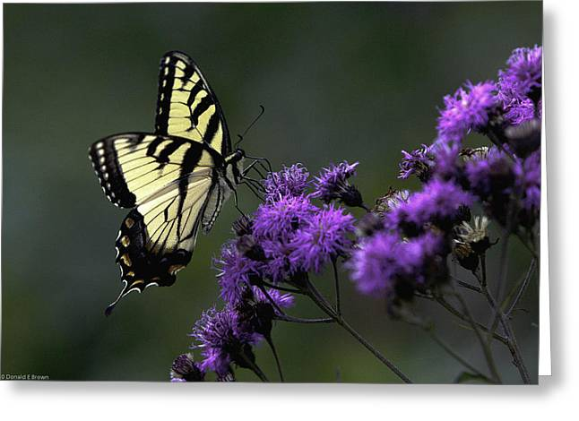 Swallowtail On Purple Greeting Card
