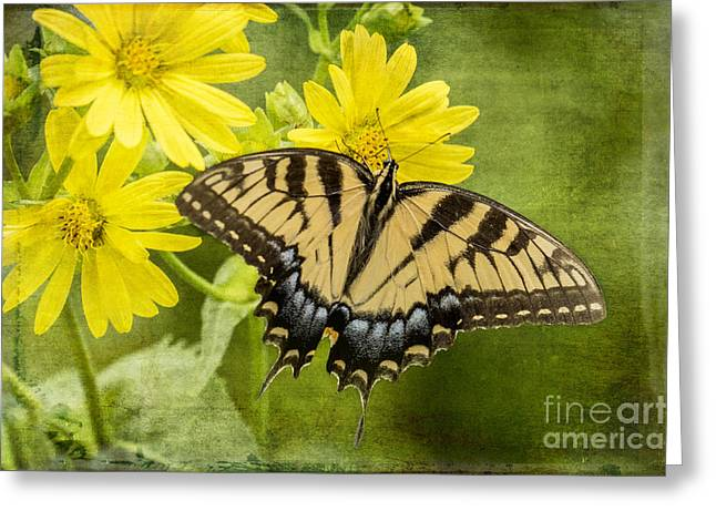Greeting Card featuring the photograph Swallowtail by Vicki DeVico