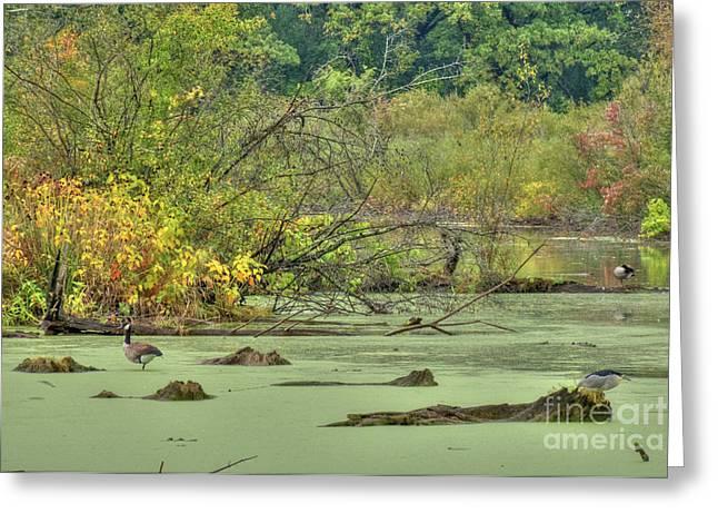 Swamp Birds Greeting Card by Deborah Smolinske