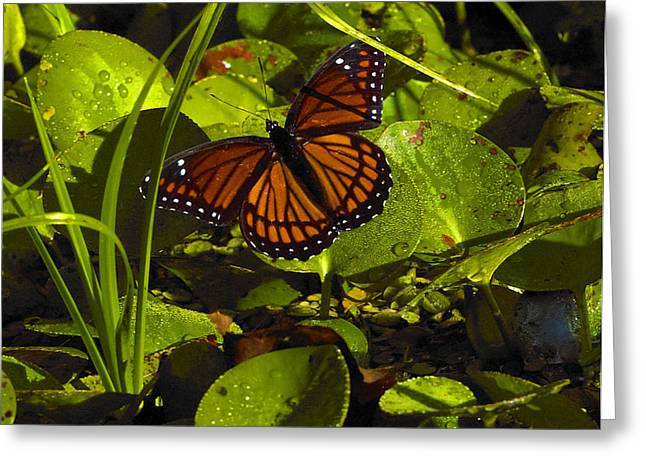 Greeting Card featuring the photograph Swamp Butterfly by Silke Brubaker