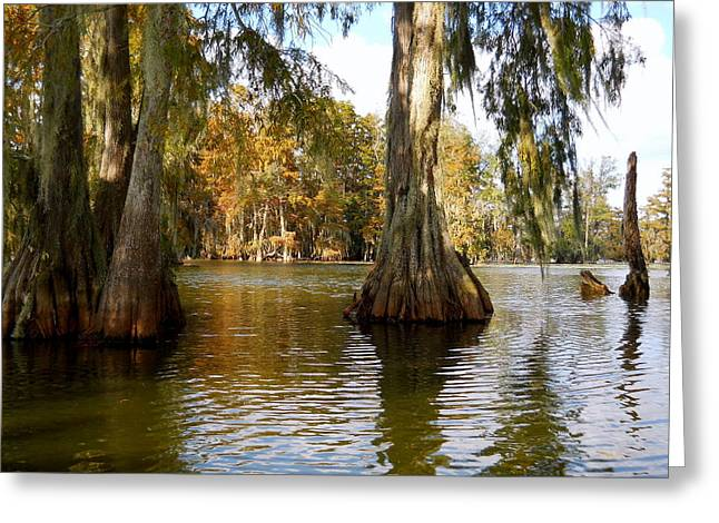 Swamp - Cypress Trees Greeting Card