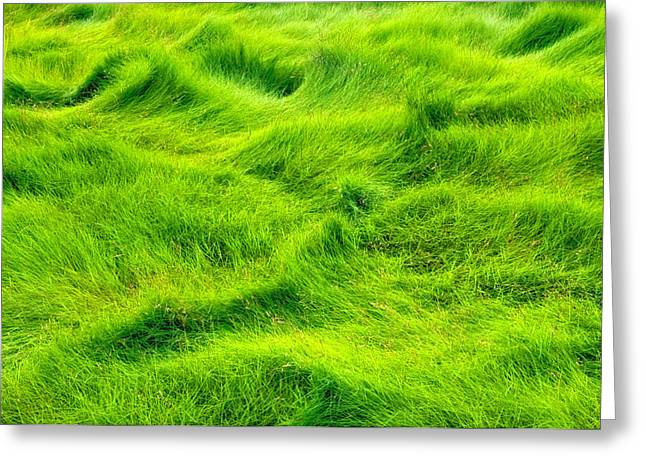 Swamp Grass Abstract Greeting Card