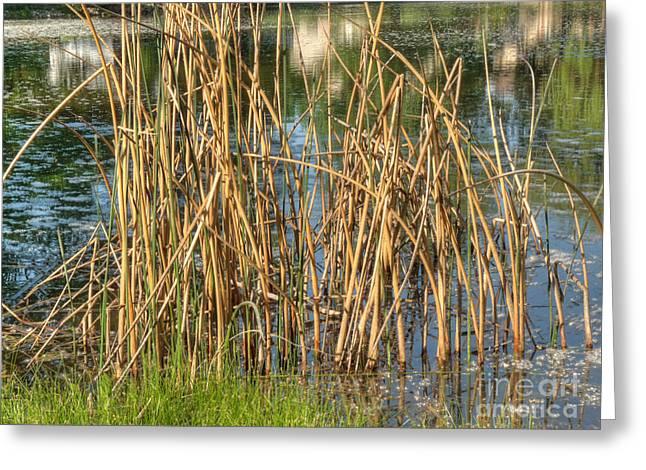 Swamp Grass Greeting Card by Deborah Smolinske