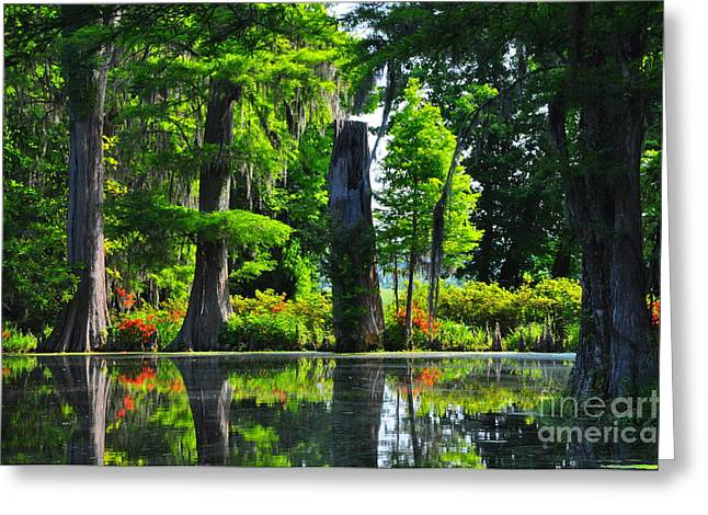 Swamp In Bloom Greeting Card