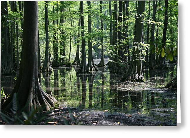 Greeting Card featuring the photograph Swamp Land by Cathy Harper