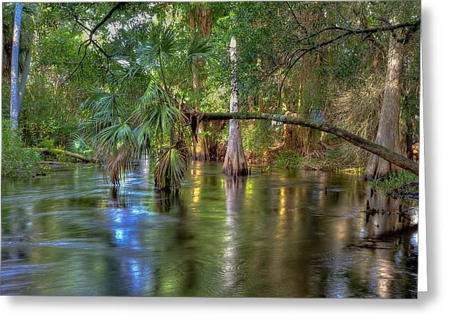 Swamp Life Greeting Card