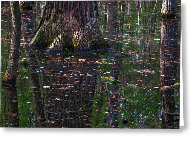 Swamp Greeting Card by Rowana Ray