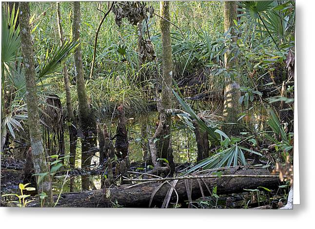 Swamp Scenery Greeting Card by Kenneth Albin