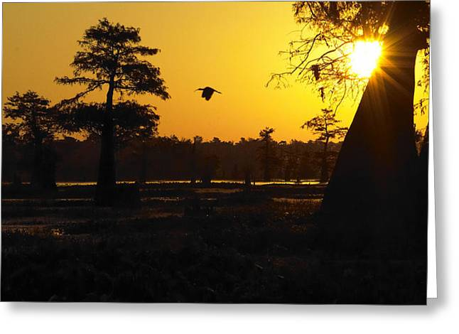 Greeting Card featuring the photograph Swamp Sunrise by Silke Brubaker