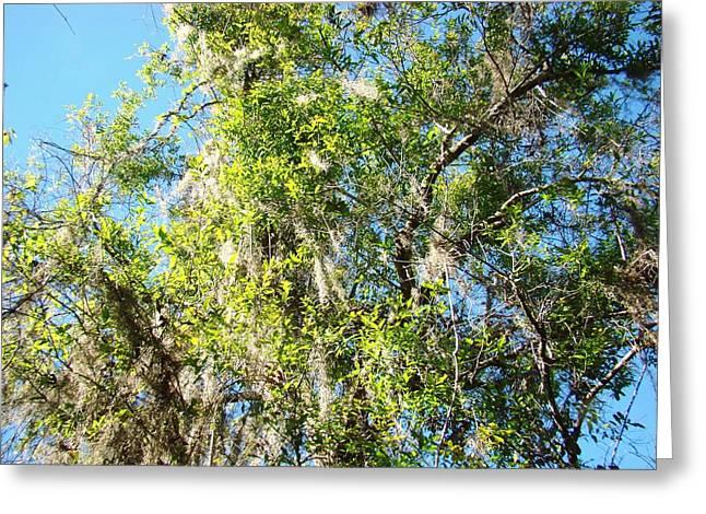 Swamp Tree Hugger Greeting Card by Van Ness