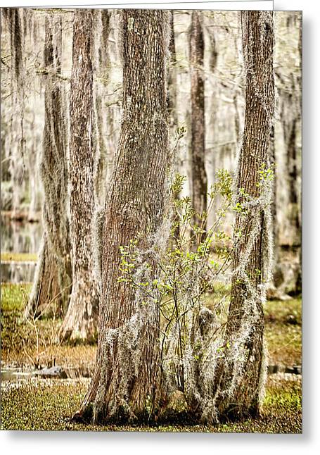 Swamp Trees Greeting Card