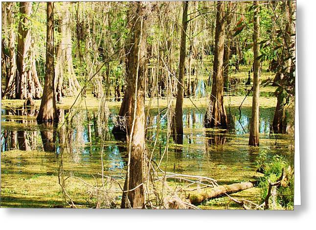 Swamp Wading 1 Greeting Card by Van Ness