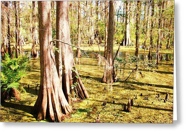 Swamp Wading 3 Greeting Card by Van Ness