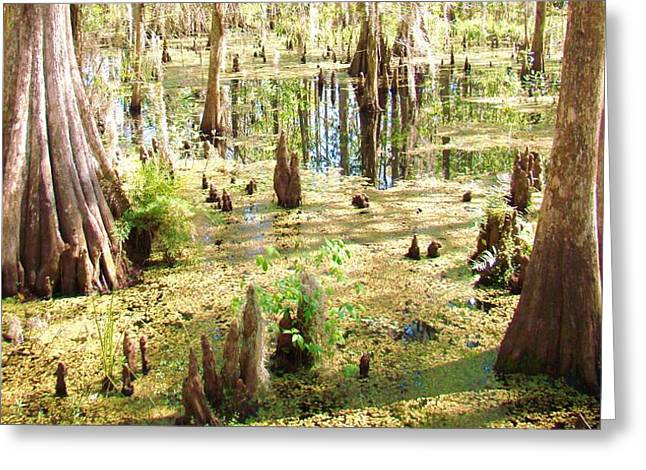 Swamp Wading 6 Greeting Card by Van Ness