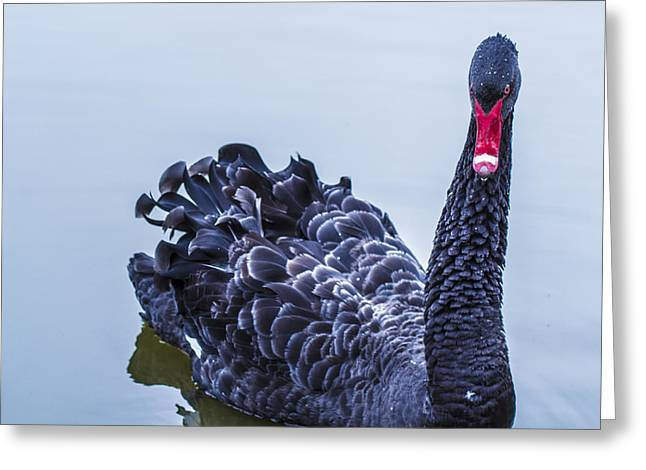 Greeting Card featuring the photograph Swan 1 by Naomi Burgess
