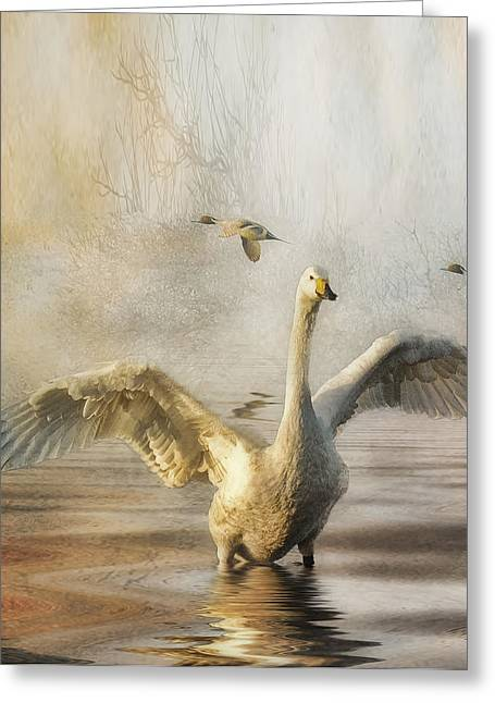 Greeting Card featuring the photograph Swan At Sundown by Brian Tarr