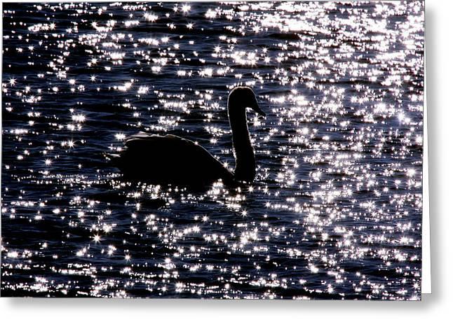 Swan Bay Greeting Card