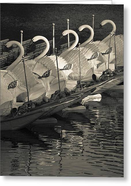 Swan Boats In A River, Boston Public Greeting Card
