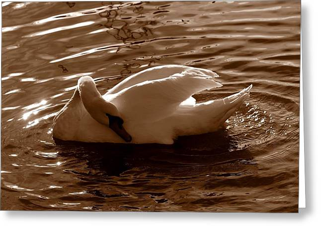 Swan By The Lake  Greeting Card