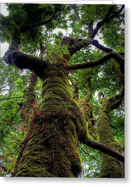 Swan Creek Tree Greeting Card by David Patterson