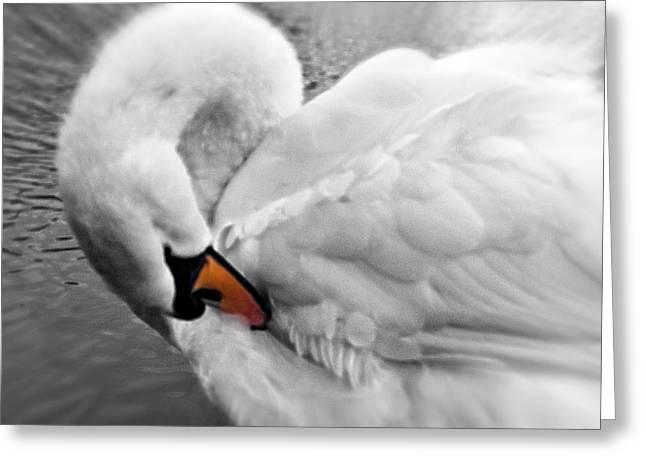 Swan Elegant Greeting Card
