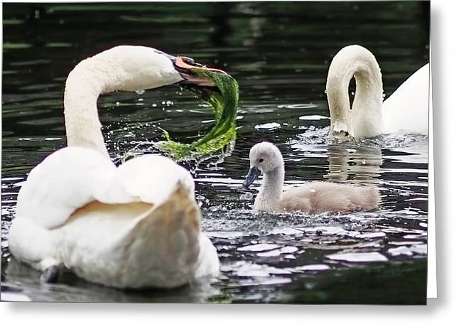 Swan Family Meal Greeting Card by Rona Black