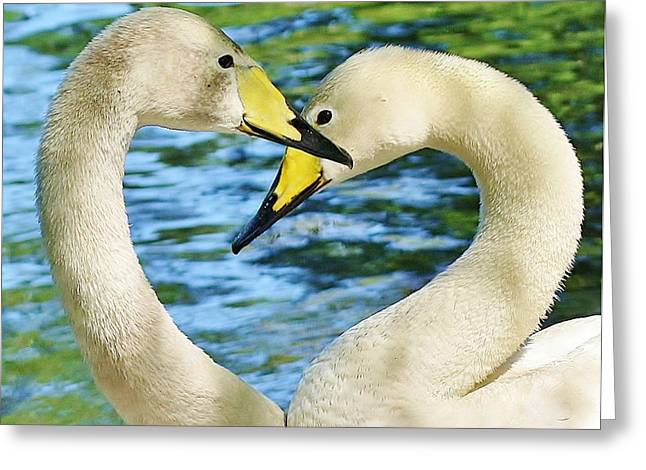 Swan Heart Greeting Card by Paulette Thomas