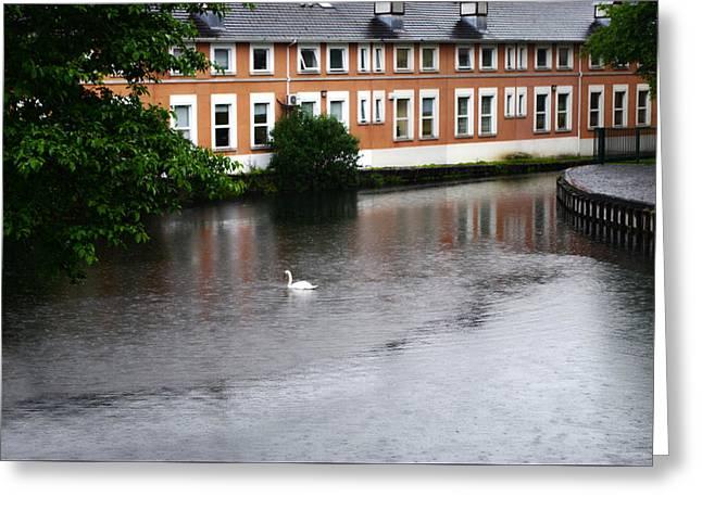Swan In Dublin Greeting Card