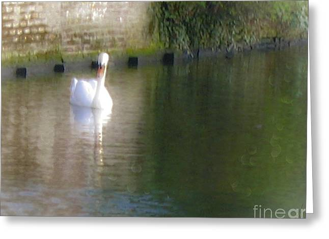 Greeting Card featuring the photograph Swan In The Canal by Victoria Harrington