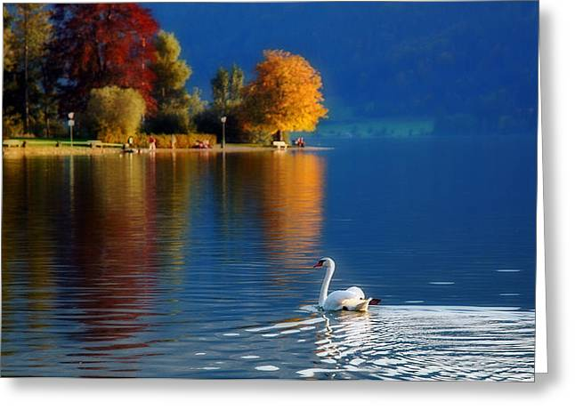 Beautiful Autumn Swan At Lake Schiliersee Germany  Greeting Card