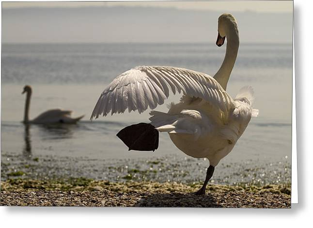 Swan Lake Greeting Card by Karim SAARI