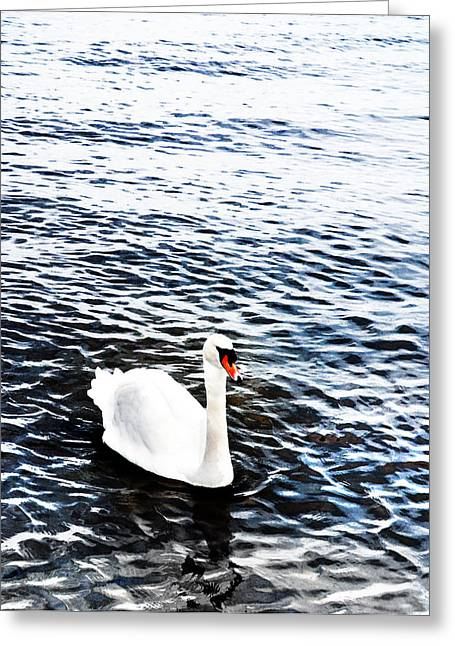 Swan Greeting Card by Mark Rogan