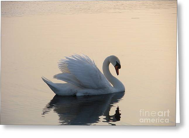 Swan On A Lake Greeting Card by Sophia Elisseeva