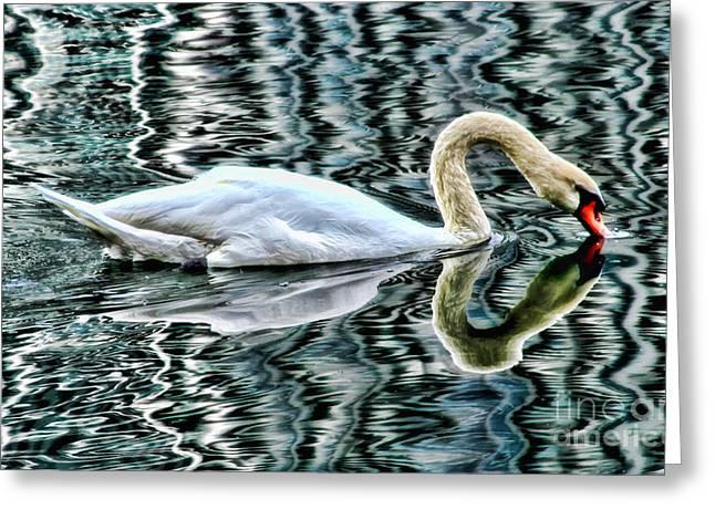 Swan On Lake Eola By Diana Sainz Greeting Card