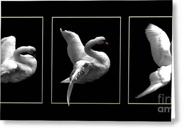 Swan Triptych With Gold Borders Greeting Card