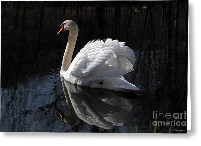 Swan With Reflection  Greeting Card