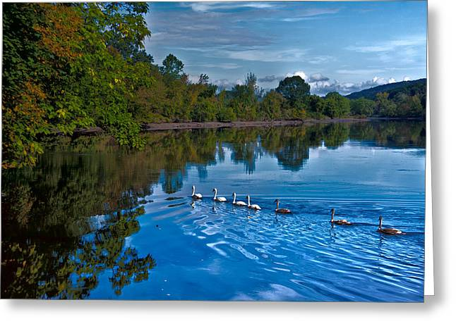 Swanny River Greeting Card by Karol Livote