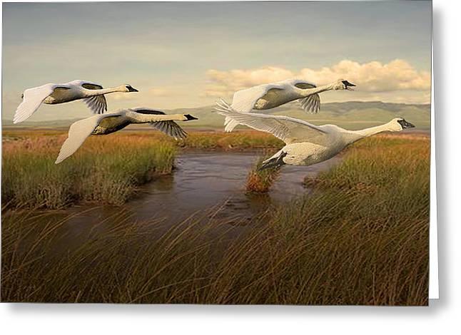 Swans Aloft At Dawn Greeting Card