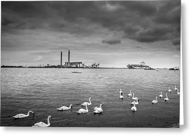 Swans And Ships. Greeting Card by Gary Gillette