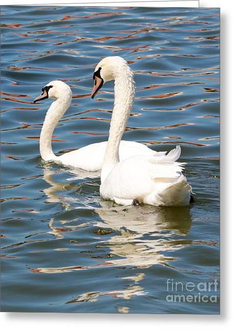 Swans And Swirls Greeting Card by Carol Groenen