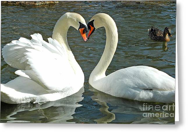 Swans At City Park Greeting Card