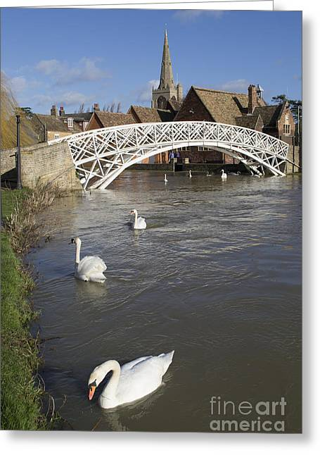 Swans At The Chinese Bridge Greeting Card by Keith Douglas