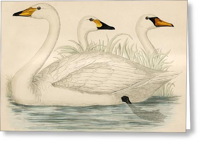 Swans Greeting Card by Beverley R Morris