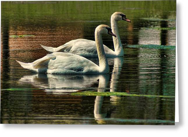 Swans Cruising Greeting Card