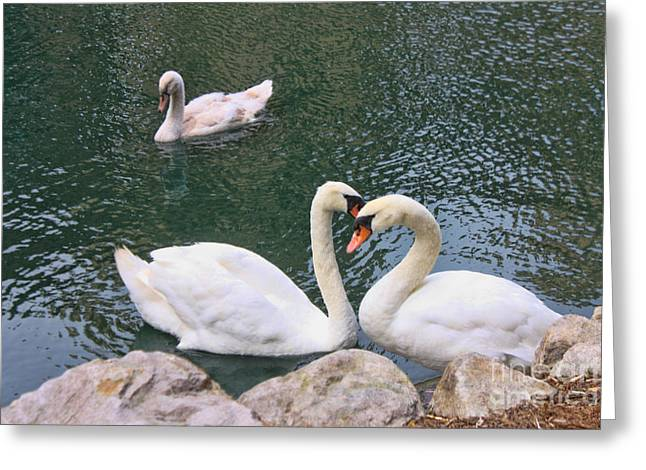 Swans In Love Greeting Card by Lidia Anderson
