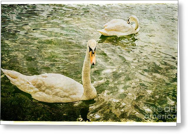 Swans In Marlow Greeting Card