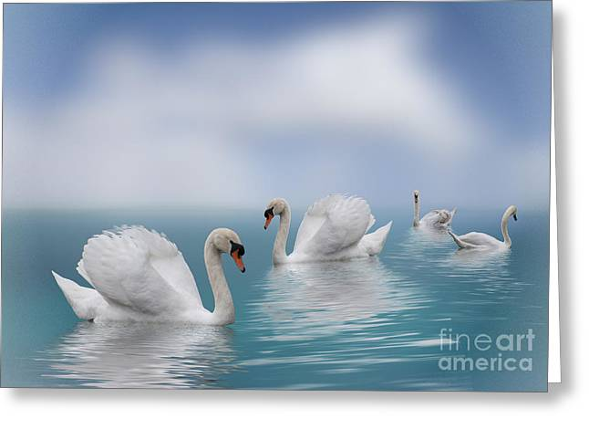 Swans In Paradise Greeting Card