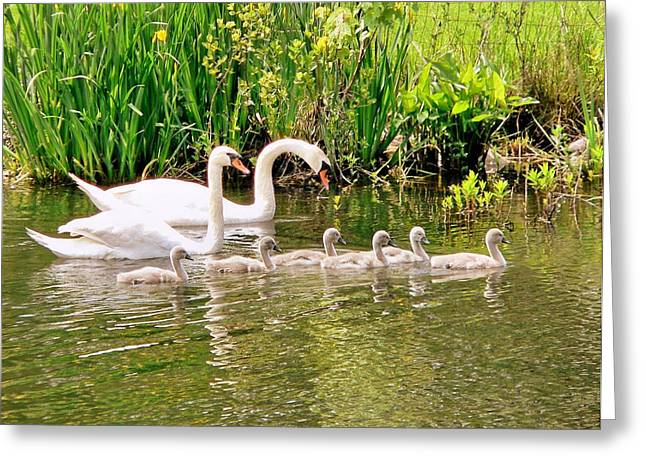Greeting Card featuring the photograph Swans by Janice Drew
