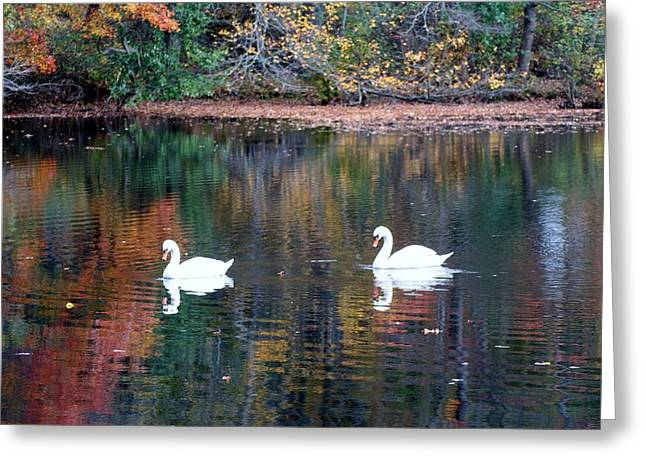 Greeting Card featuring the photograph Swans by Karen Silvestri